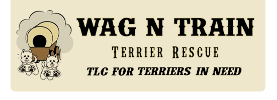 Wag N Train Rescue